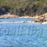 Porticciolo beach Procchio