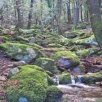 Elba nature forest
